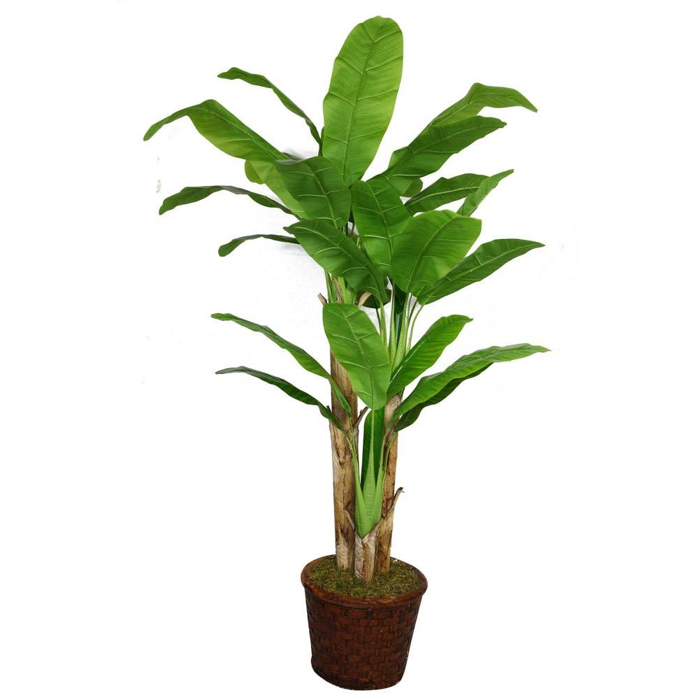 77 in. Tall Banana Tree with Real Touch Leaves in 17