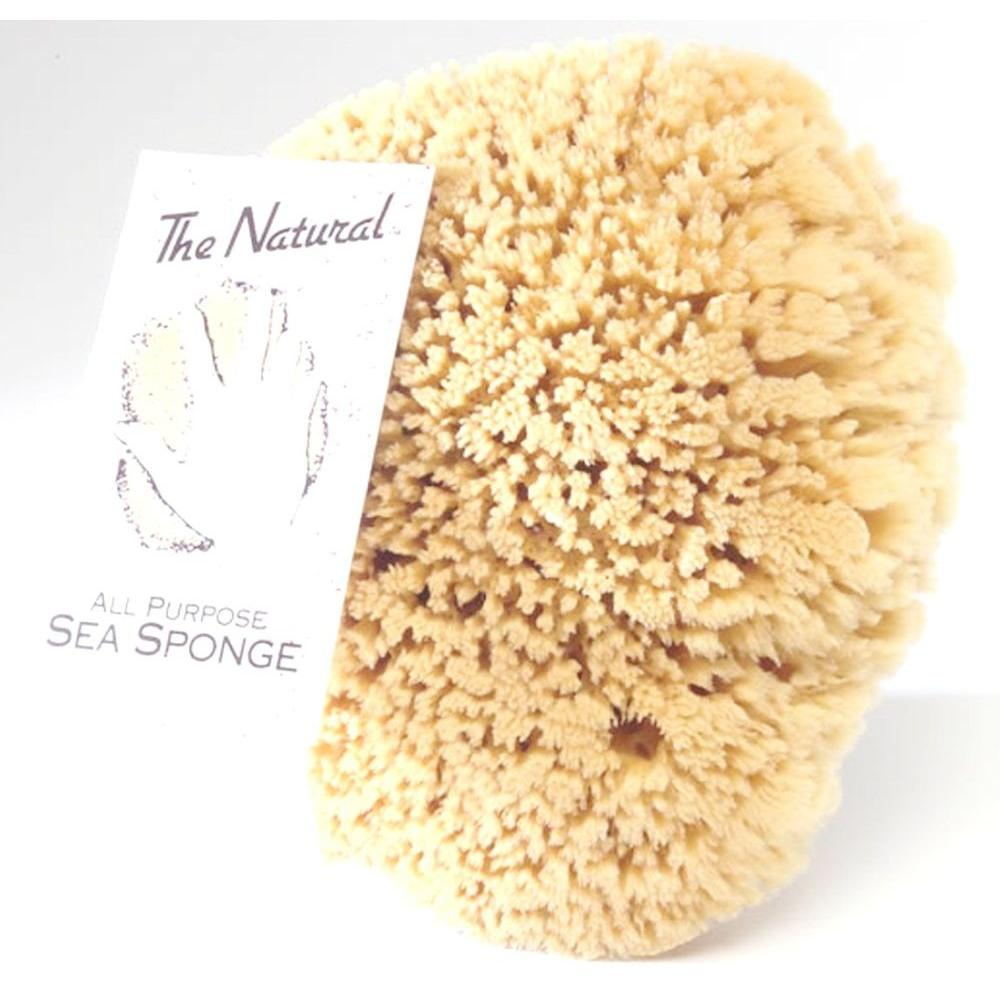 The Natural 6 - 7 in. Sea Sponge (6-Pack)-SS6070 - The