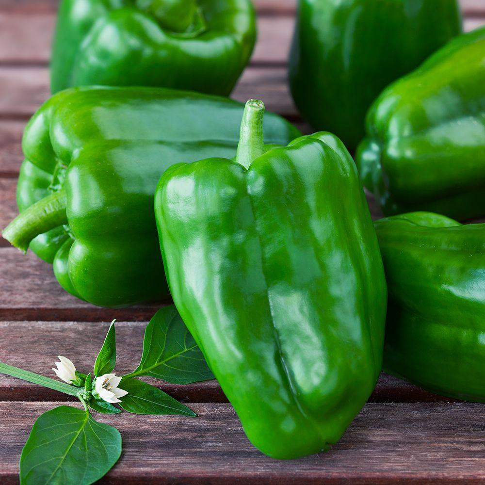 4.5 in. Bell-Green Pepper