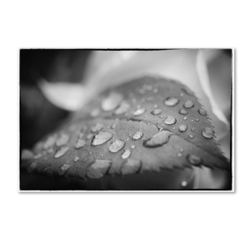"12 in. x 19 in. ""Dew on Leaf of Rose Plant"""