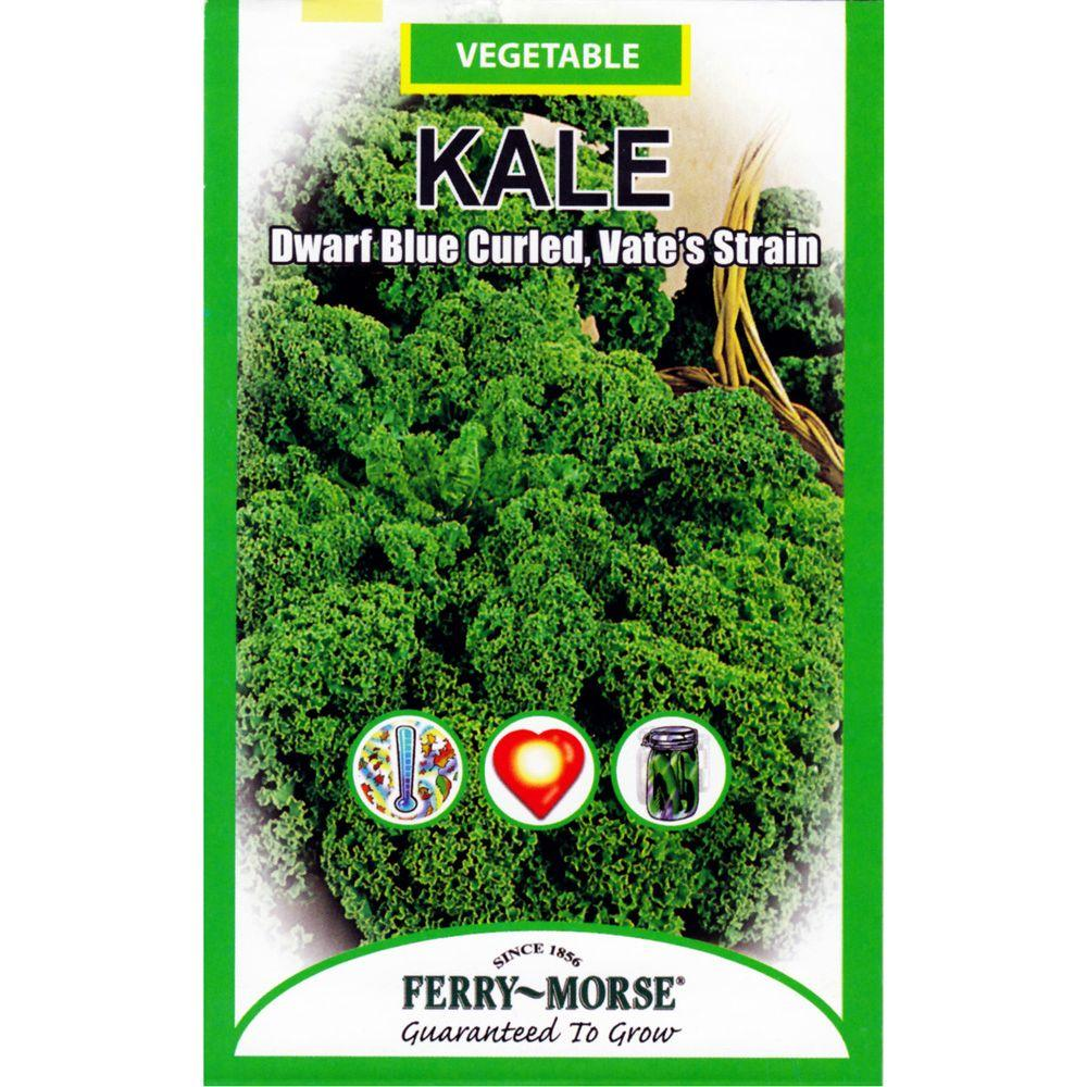 Ferry-Morse Vate's Strain Kale Dwarf Blue Curled Seed