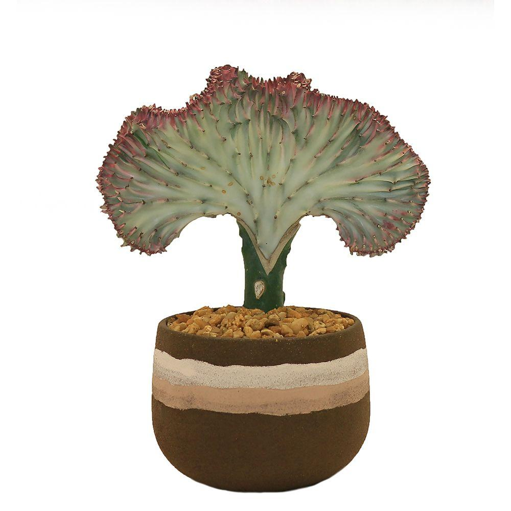 Delray Plants Coral Cactus in 4 in. Stripe Brown Pot-CORALSTRIBROWN - The Home Depot