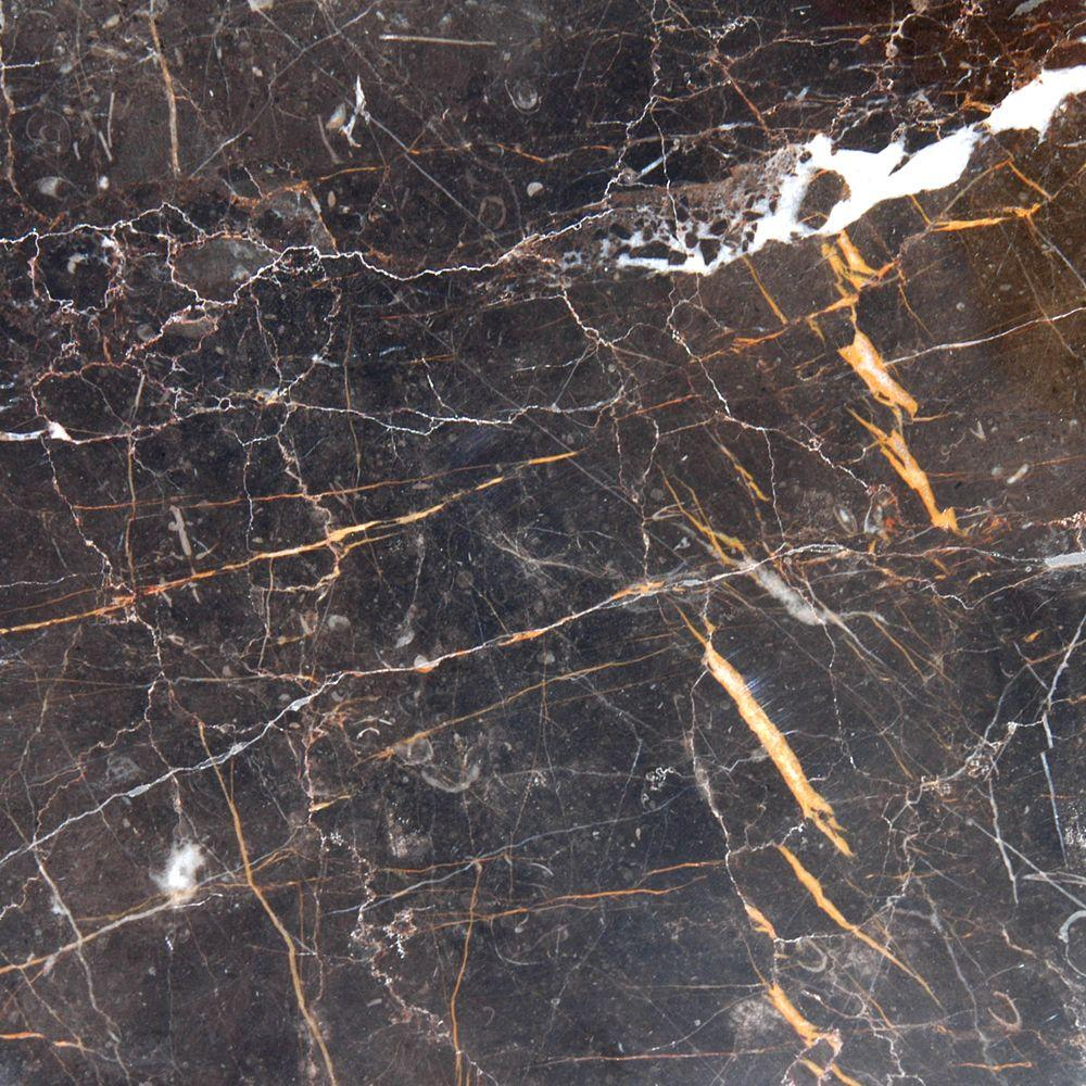 MS International Frontier Brown 12 in. x 12 in. Polished Marble