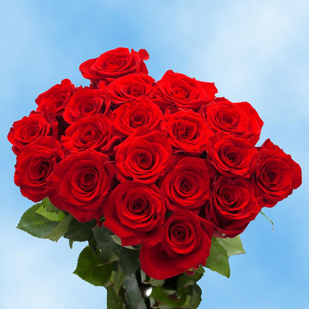 Globalrose Fresh RedMothers Day Roses (50 Stems)