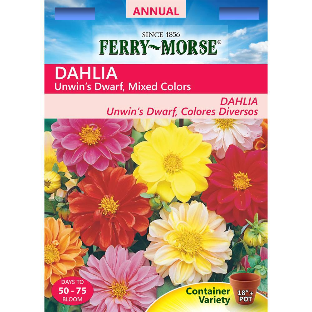 Ferry Morse Dahlia Unwins Dwarf Mixed Colors Seed 1042 The Home Depot