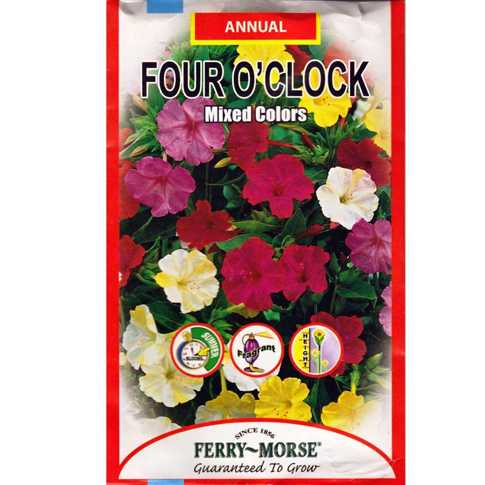 Ferry-Morse Four O'Clock Mixed Colors Seed-1051 - The Home Depot