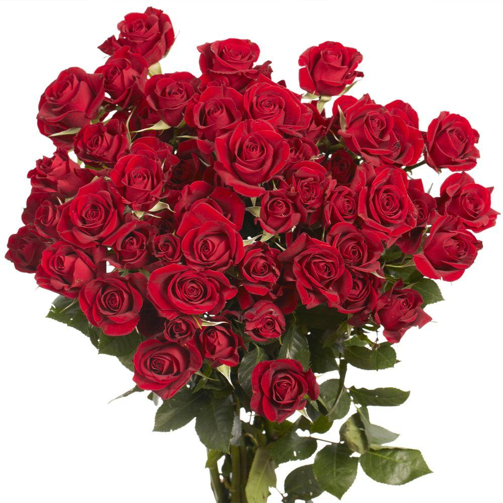 Globalrose Fresh Red Spray Roses (100 Stems - 350 Blooms)-spray-roses-red-100 -