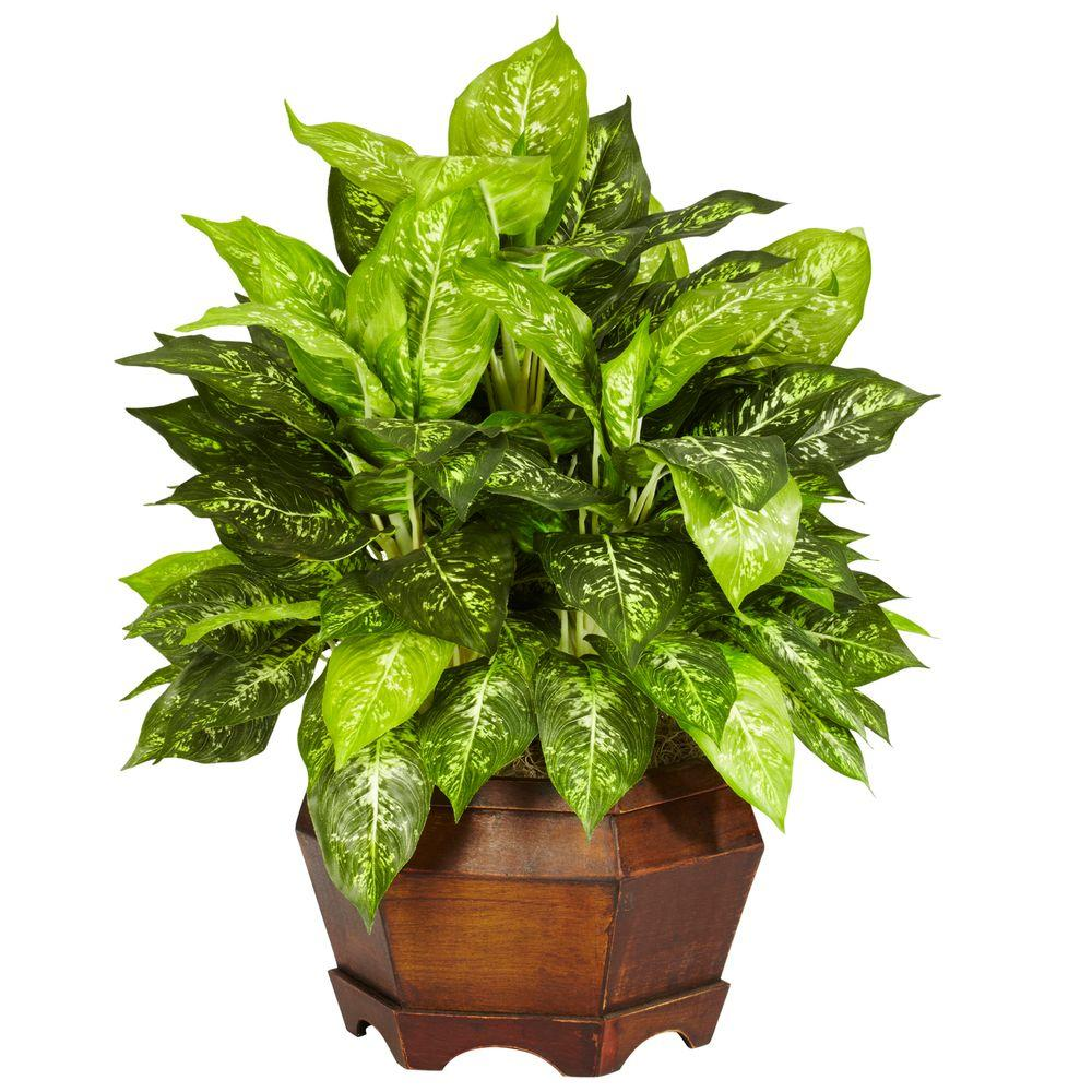 null 24 in. H Green Variegated Dieffenbachia with Large Hexagon Silk Plant