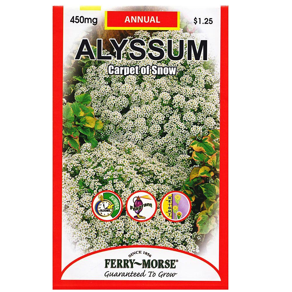 Ferry-Morse Alyssum Carpet of Snow Seed-8029 - The Home Depot