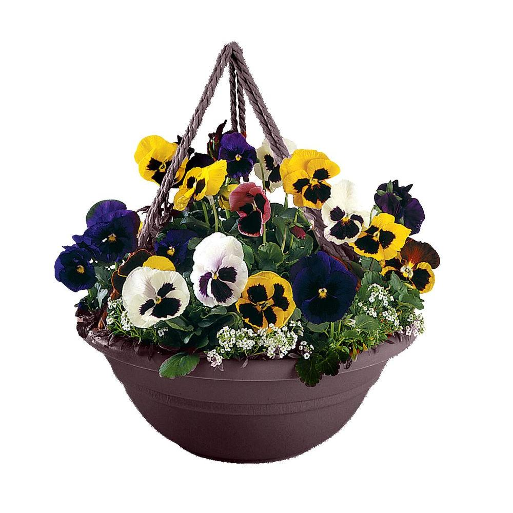 Bloem 17 in. Exotica Plastic Milano Hanging Basket-MBHB1517-56 - The Home