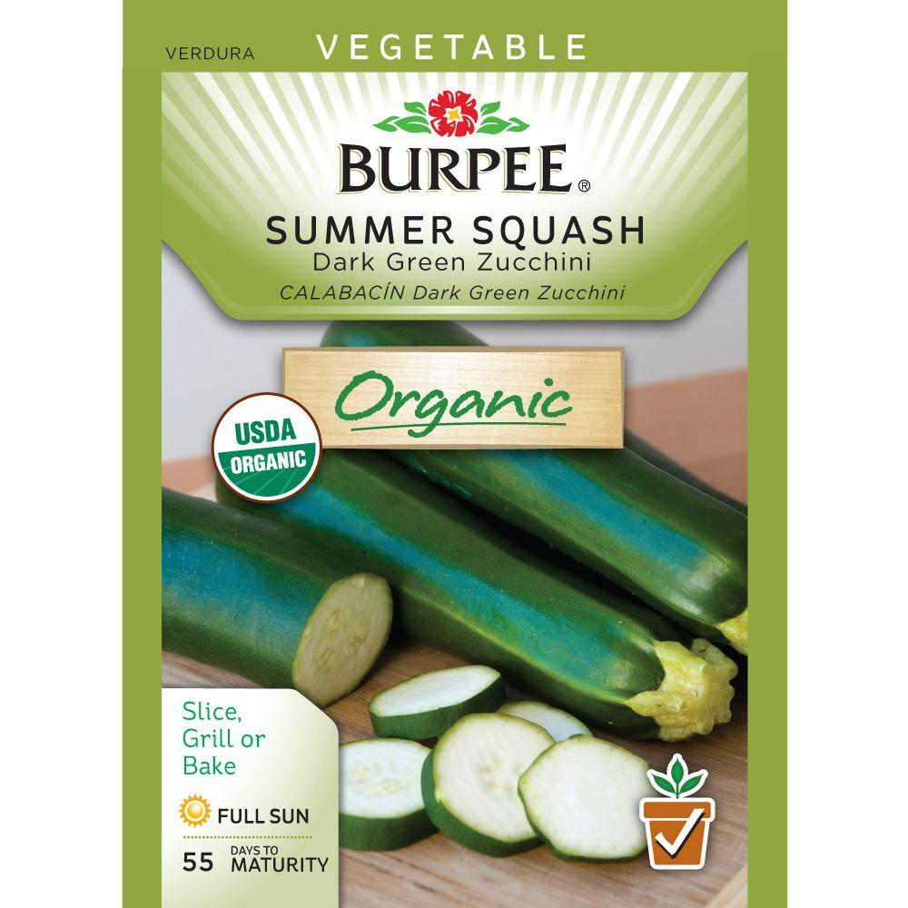 Burpee Squash Summer Dark Green Zucchini Organic Seed-60938 - The Home