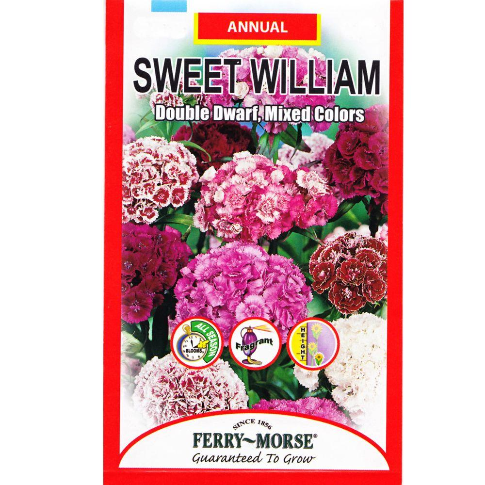 Ferry-Morse Sweet William Double Dwarf Seed-1162 - The Home Depot