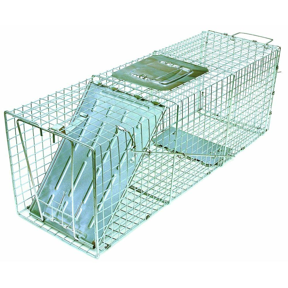 JT Eaton Answer Single Door Live Animal Cage Trap for Large Size Pests Steel Wire