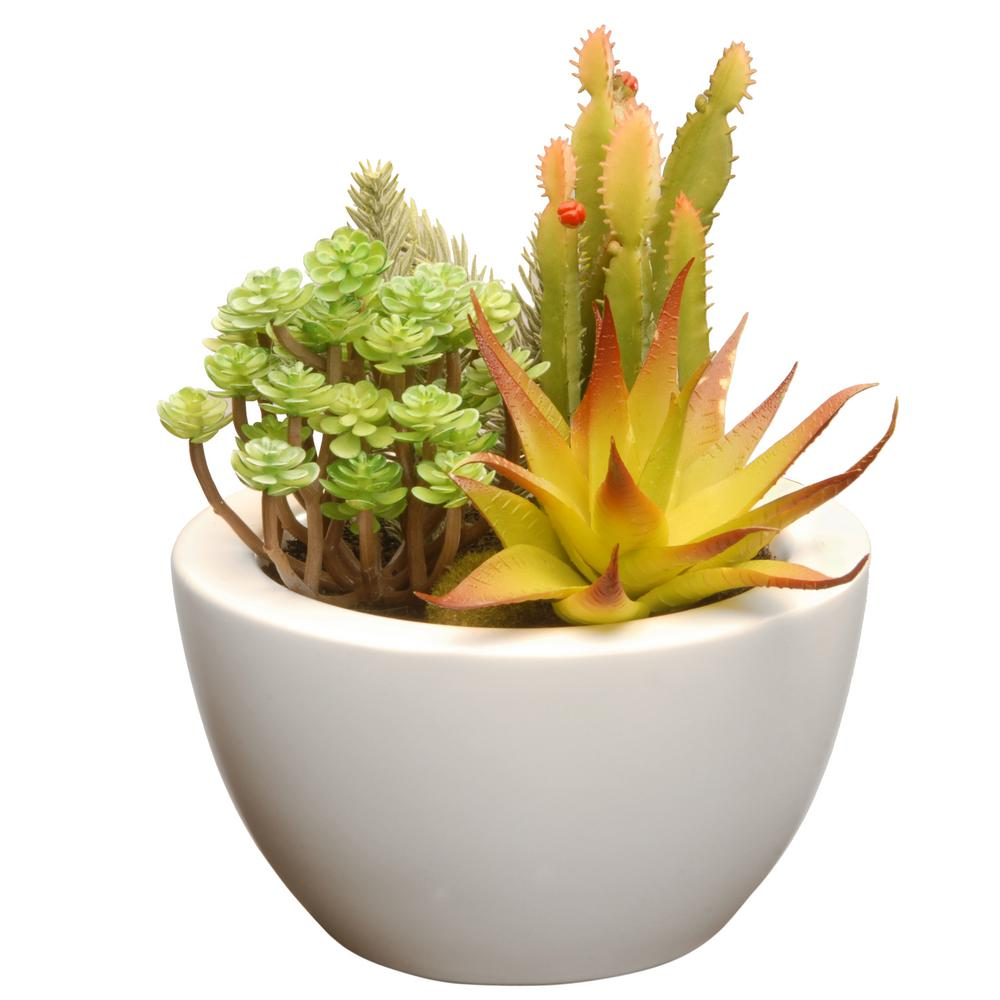 National Tree Company 7.5 in. Succulent in Ceramic Pot-RAS-XF169W - The