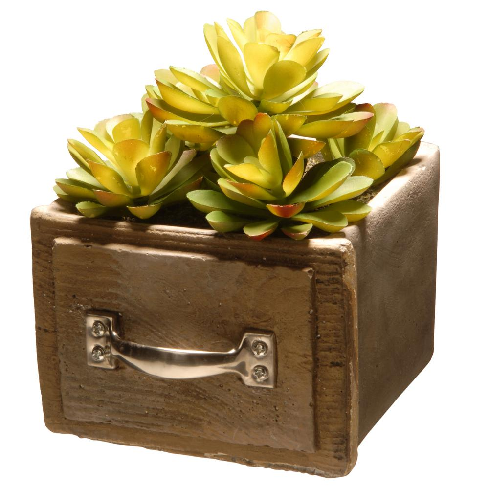 7 in. and 8 in. Succulent in a Cement Pot (Set