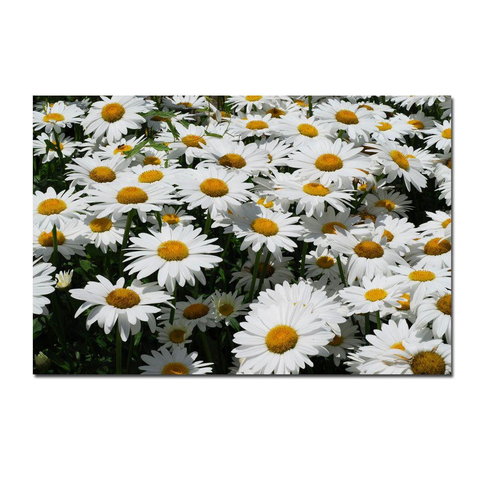 24 in. x 16 in. I love Daisies! Canvas Art