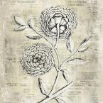 "20 in. x 20 in. ""Antiqued Bloom II"" Printed Contemporary Artwork"