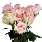 Pastel Pink Color Roses (250 Stems)