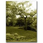 35 in. x 47 in. Central Park II Canvas Art