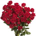 Red Spray Roses (100 Stems - 350 Blooms)