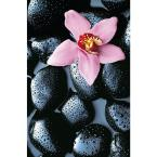 69 in. x 45 in. Stone Orchid Wall Mural