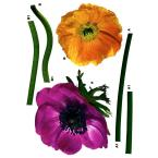19 in. x 27 in. Anemone daisy Wall Decal