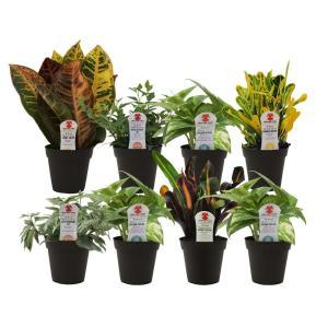 Exotic Angel Plants