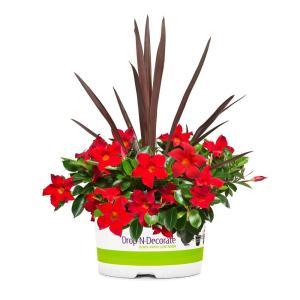 Plants & Garden Flowers