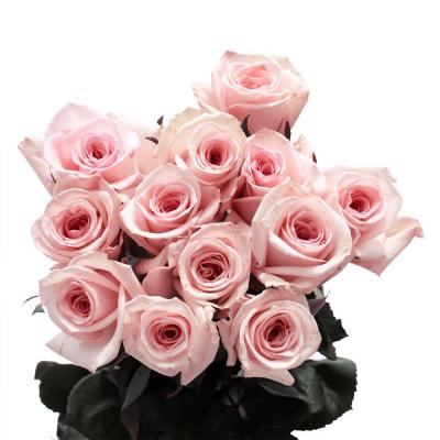 Globalrose Pink Valentines Day Roses (100 Stems)