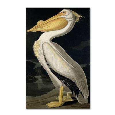 32 in. x 22 in. American White Pelican Canvas Art