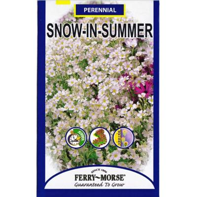 110 mg Snow-in-Summer Seed