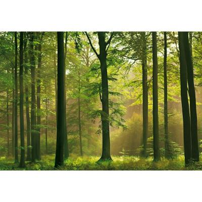 100 in. x 144 in. Autumn Forest Wall Mural Product Photo