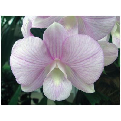 Trademark Fine Art 24 in. x 32 in. Tropical Orchid Gallery Wrapped Canvas Art-DISCONTINUED