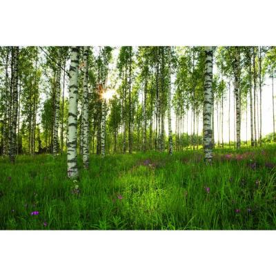 The wallpaper company sq ft mural birch trees for Birch trees wallpaper mural