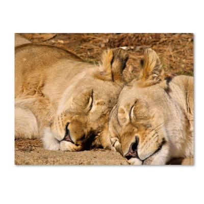 Trademark Fine Art 16 in. x 24 in. National Zoo - Lions Canvas Art