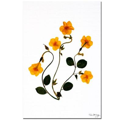 24 in. x 16 in. Dancing Daffodils Canvas Art