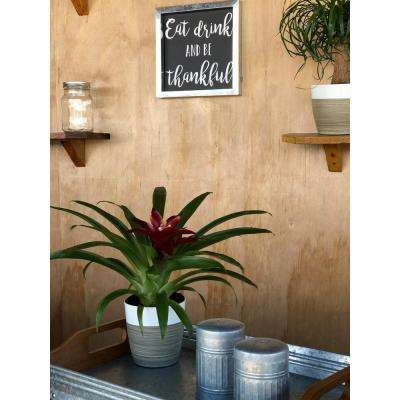 Bromeliad Plant Grower's Choice Colors in 4 in. Decor Por