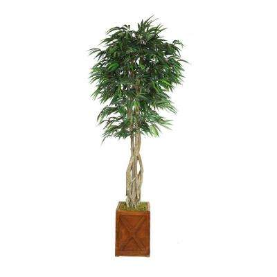 87 in. Tall Willow Ficus with Multiple Trunks in 13 in. Fiberstone Planter
