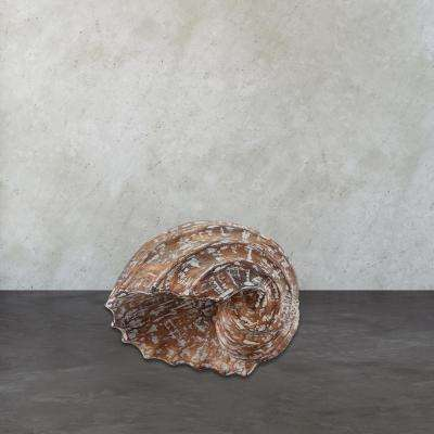8 in. x 19 in. Burnt White Wash Wooden Decorative Helix Shell Figurine