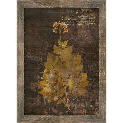 "25 in. x 20 in. ""Aroma VI"" by Sofia Fox Gallery Wrapped Framed Canvas Wall Art"