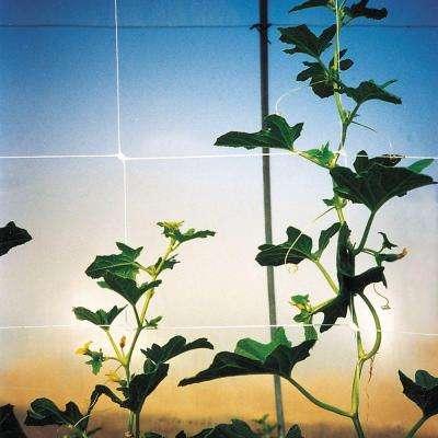 67 in. x 3280 ft. White Hortonova Plant Trellis Net