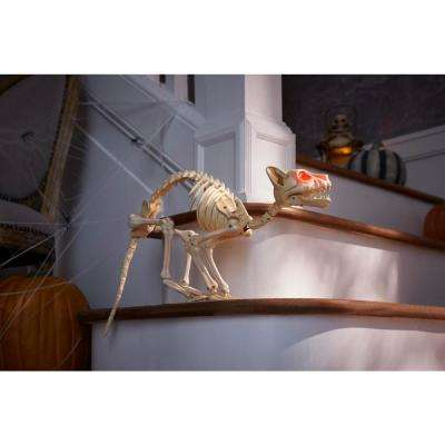 14 in. Animated Skeleton Cat with Light and Sound