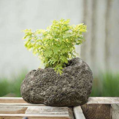 MPG Volcanic Rock Planter Stone Garden Decor Accent Plant Flower Grow Yard Ash