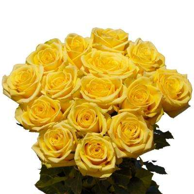 Fresh Stems Yellow Beautiful Roses (75 Extra Long Stems)