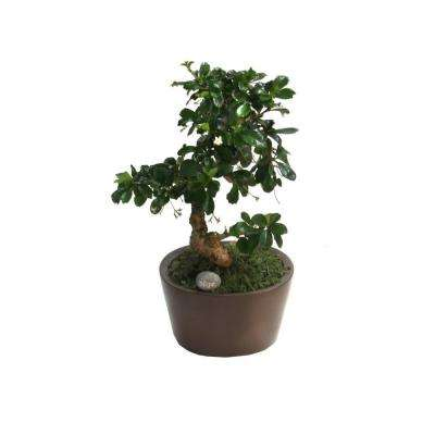 Bonsai Small 6 in. Fukien Tea Ceramic Pot