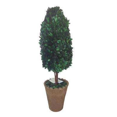 8 in. x 12 in. x 25 in. Preserved Natural Boxwood Oval with Clay Pot