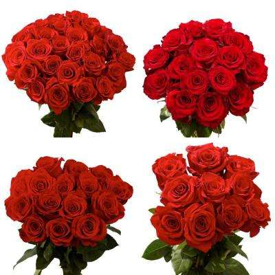 Red Color Roses (100 Stems)