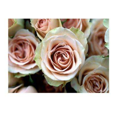 14 in. x 19 in. Pale Pink Roses Canvas Art
