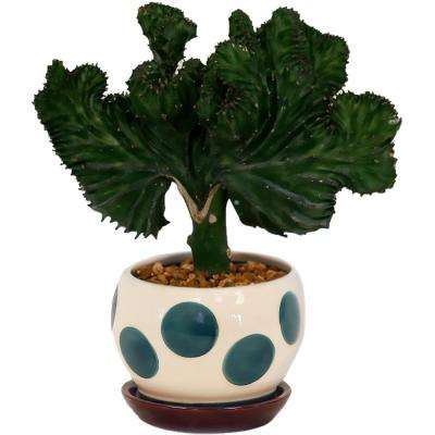 Coral Cactus in 4 in. Marcy Turquoise Pot