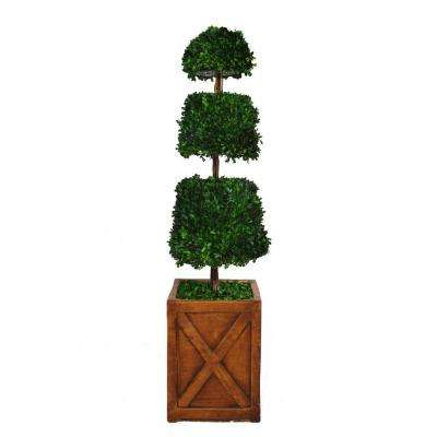 53 in. Tall Preserved Natural Spiral Boxwood Cone Topiary in 13 in. Fiberstone Planter